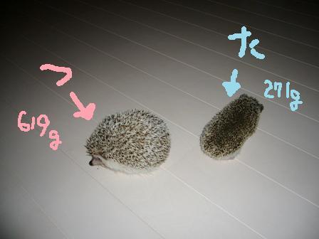 2008.9 た・つ.jpg